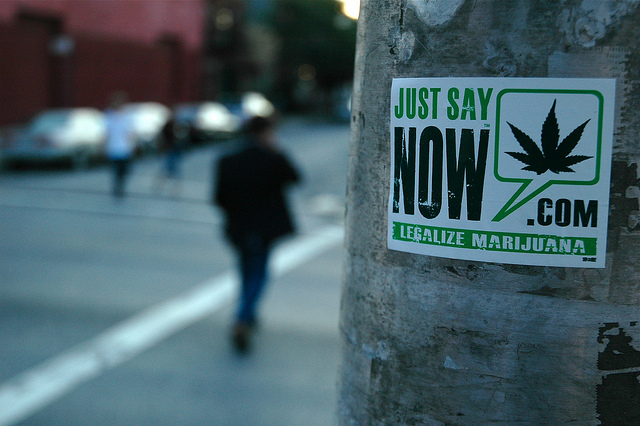 Just Say Now - Legalize Marijuana Sticker - photo by Just Say Now