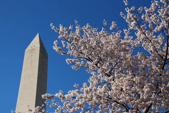 Monumental cherry - photo by Adam Fagen
